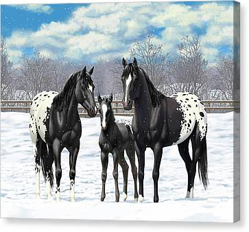 Black Appaloosa Horses In Winter Pasture Canvas Print by Crista Forest