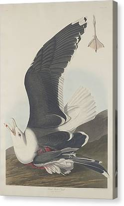 Seagull Canvas Print - Black-backed Gull by Dreyer Wildlife Print Collections