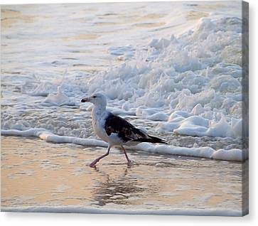 Canvas Print featuring the photograph Black-backed Gull by  Newwwman