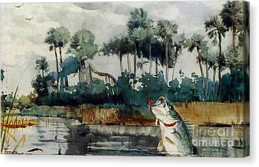 Canvas Print featuring the painting Black Bass Florida by Pg Reproductions