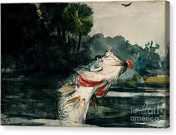 Canvas Print featuring the painting Black Bass by Pg Reproductions