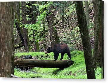 Black Bear Crossing Log In Woods Canvas Print