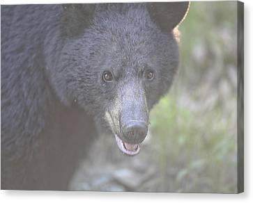 Black Bear  Canvas Print by Glenn Vidal