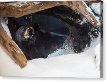 Canvas Print featuring the digital art Black Bear In Its Winter Den by Chris Flees