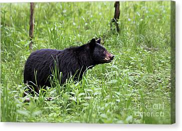 Canvas Print featuring the photograph Black Bear In The Woods by Andrea Silies