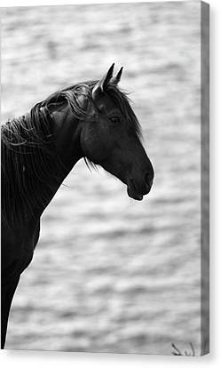 Black Beauty Canvas Print by Aidan Moran