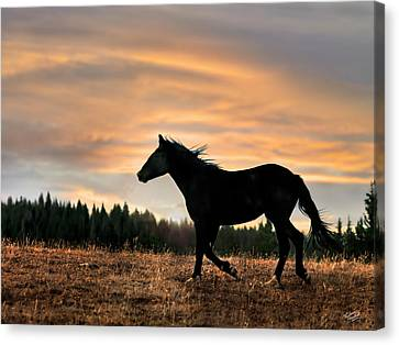 Black Beauty At Sunset Canvas Print