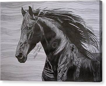 Canvas Print featuring the drawing Black Beauty by Melita Safran