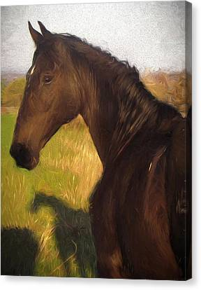 Black Beauty Canvas Print by Shannon Story