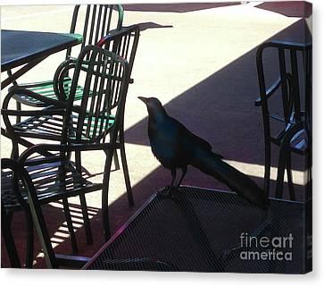 Black Bird At Central Market Canvas Print by Felipe Adan Lerma