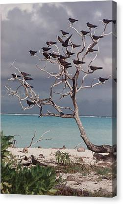 Canvas Print featuring the photograph Black Birds by Mary-Lee Sanders