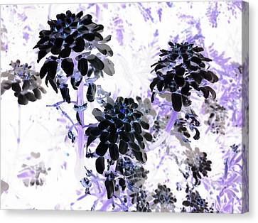 Black Blooms I I Canvas Print