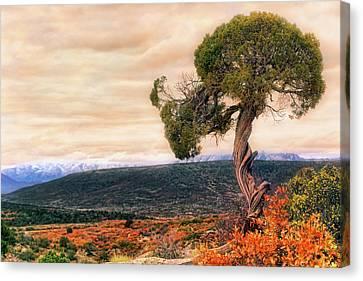 Black Canyon Juniper - Colorado - Autumn Canvas Print by Jason Politte