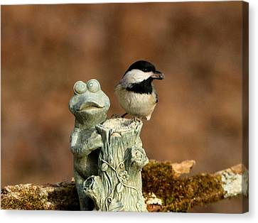 Black-capped Chickadee And Frog Canvas Print
