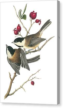 Black-capped Chickadee Canvas Print by John James Audubon