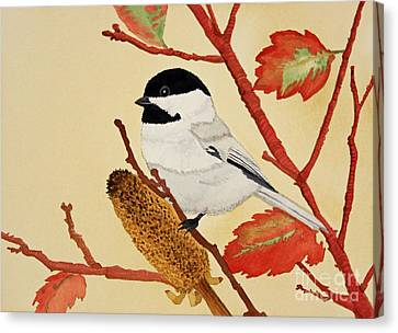Black Capped Chickadee Canvas Print by Norma Appleton