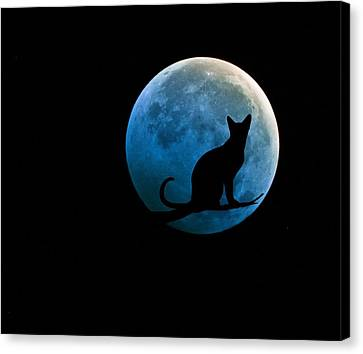 Black Cat And Blue Full Moon Canvas Print