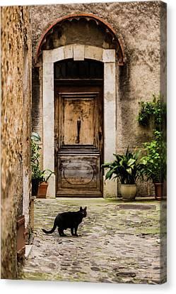 Black Cat And Wood Door, Biot, France Canvas Print