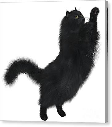 Black Cat Canvas Print by Corey Ford