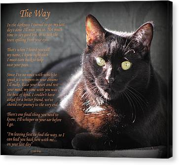 Black Cat The Way Canvas Print