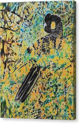 Black Cockatoo In Wattle Canvas Print