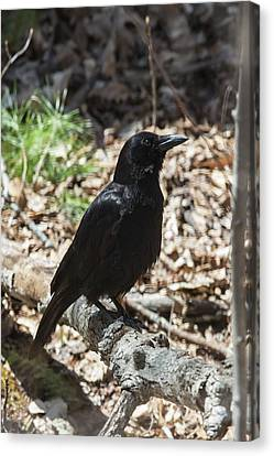 Black Crow In The Forest Canvas Print