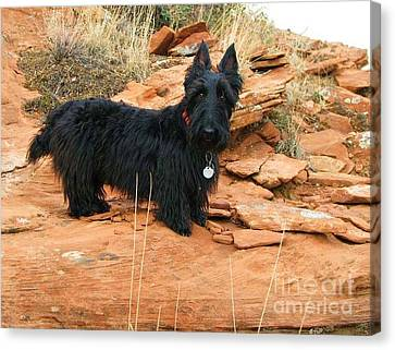 Black Dog Red Rock Canvas Print