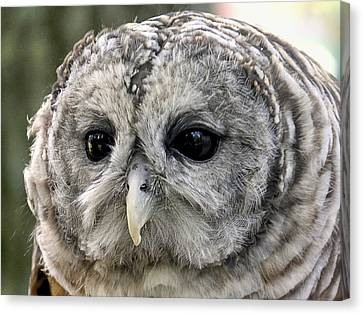 Black Eye Owl Canvas Print by Bob Slitzan