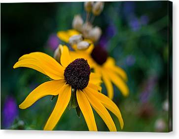 Canvas Print featuring the photograph Black Eyed Susan Daisy by Gary Smith