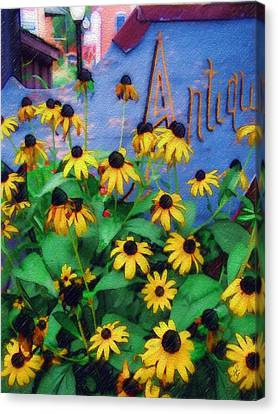 Canvas Print featuring the photograph Black-eyed Susans At The Bag Factory by Sandy MacGowan