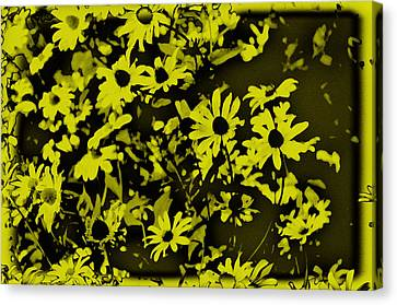 Black Eyed Susan's Canvas Print by Bill Cannon