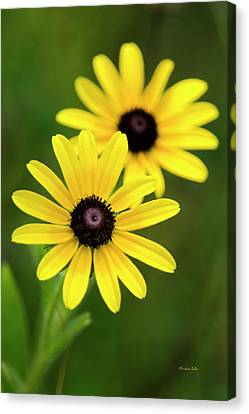 Black Eyed Susans Canvas Print by Christina Rollo