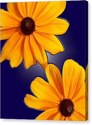 Black-eyed Susans On Blue Canvas Print