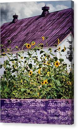 Canvas Print featuring the photograph Black Eyed Susans by Polly Peacock