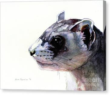 Black-footed Ferret Canvas Print - Black-footed Ferret by Maria Kaprielian