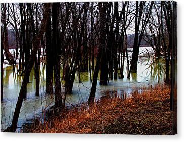 Black  Forest -  Image  4599 Canvas Print