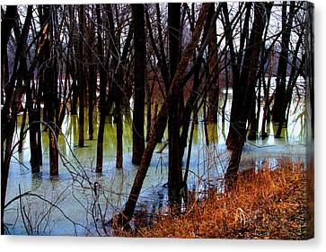 Black  Forest - Image 4605 Canvas Print