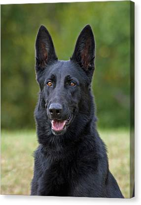 Black German Shepherd Dog Canvas Print