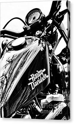 Black Harley Canvas Print by Tim Gainey