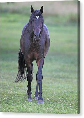 Black Horse Canvas Print by Glenn Vidal