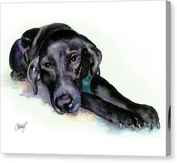 Black Lab Stretching Out Canvas Print