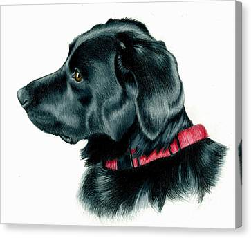 Black Lab With Red Collar Canvas Print by Heather Mitchell
