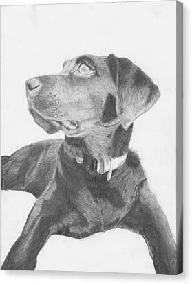 Black Labrador Retriever Canvas Print by David Smith