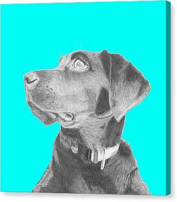 Black Labrador Retriever In Blue Headshot Canvas Print by David Smith