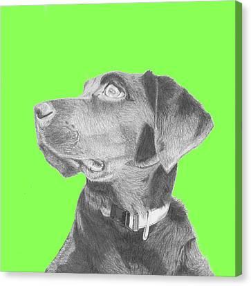 Black Labrador Retriever In Green Headshot Canvas Print