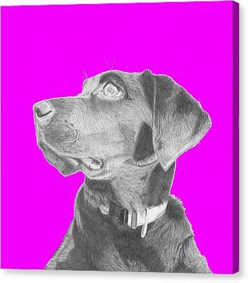 Black Labrador Retriever In Pink Headshot Canvas Print by David Smith