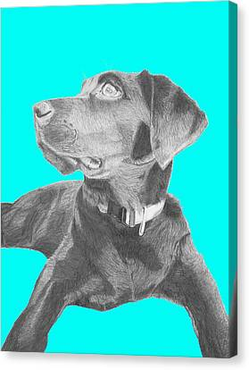 Black Labrador Retriever With Blue Background Canvas Print by David Smith
