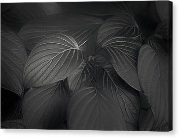 Black Leaves Canvas Print by Scott Norris