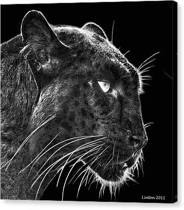 Black Leopard 2 Canvas Print by Larry Linton