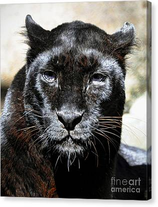 Canvas Print featuring the photograph Black Leopard by Savannah Gibbs